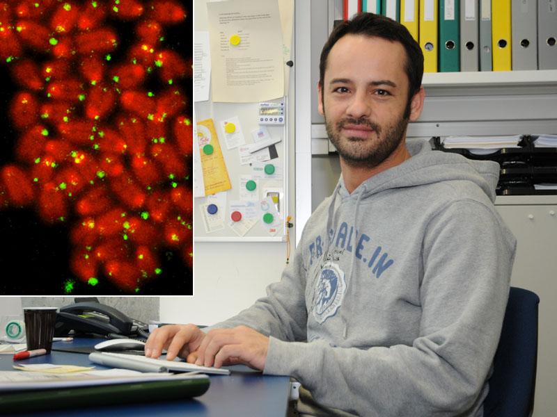 Treibstoff F R Die Telomer Forschung