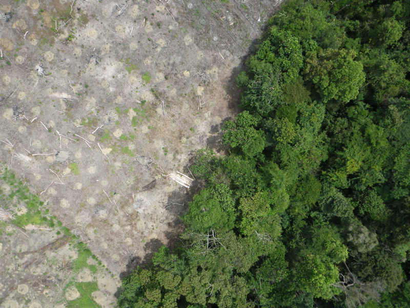 Drone in action for the rainforest aerial reconnaissance with a do it yourself drone the rainforest being cleared for new plantations all images by courtesy of lian pin koh eth zurich solutioingenieria Choice Image