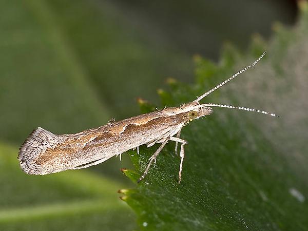 gegen insekten natürliche